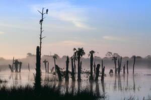 Fog Shrouded Morning