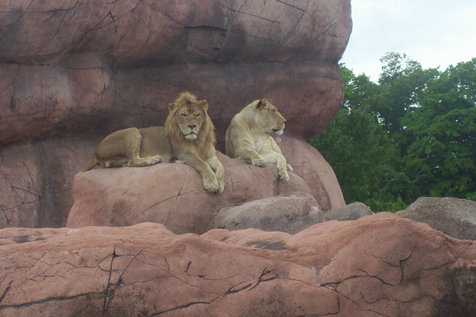Las mejores fotos de leones nunca antes vistas
