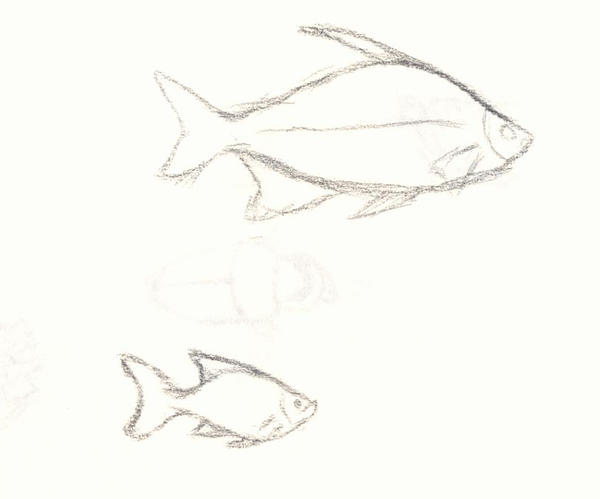 pencil sketch of fish 2 by nusku42