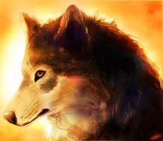 Wolf Study by TabbyCat0066