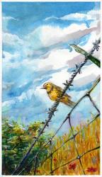 Handsome Meadowlark