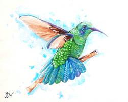 Litmus Humming bird by chinchillacosmica