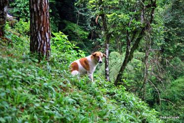 The Dogie 2 by bakulrujak