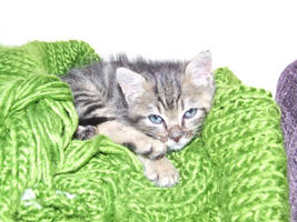 my cat by MadaleySelket