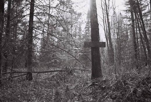 Remnants of a deer feeder