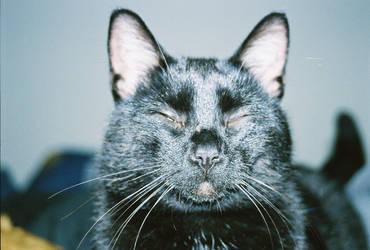 Chinese kitty