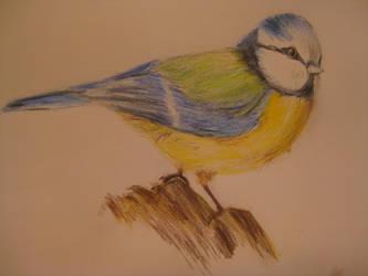 Coloured Pencils - Bird by MishamigosArt