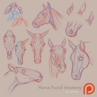 Patreon - Horse Anatomy 01 by Simkaye