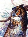 Owl Watercolour by Simkaye