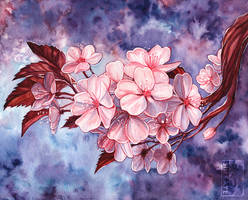 Cherry Blossom Watercolour by Simkaye