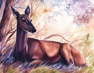 Doe Watercolour