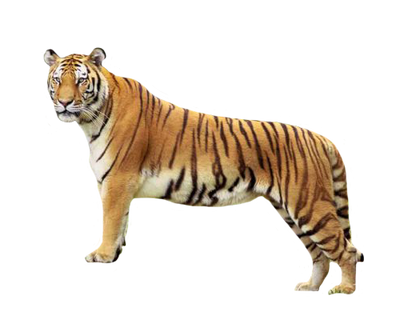 Tiger3 by rahag