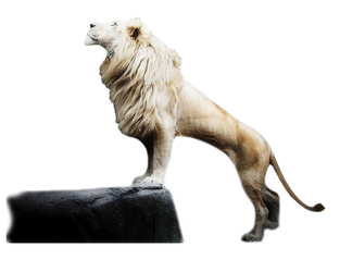 White Lion1 by rahag