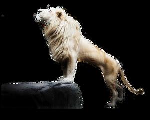 White Lion1