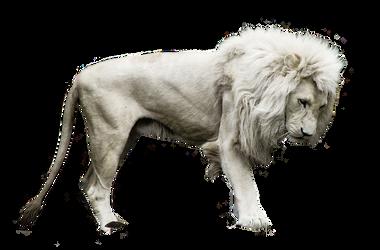 White Lion2