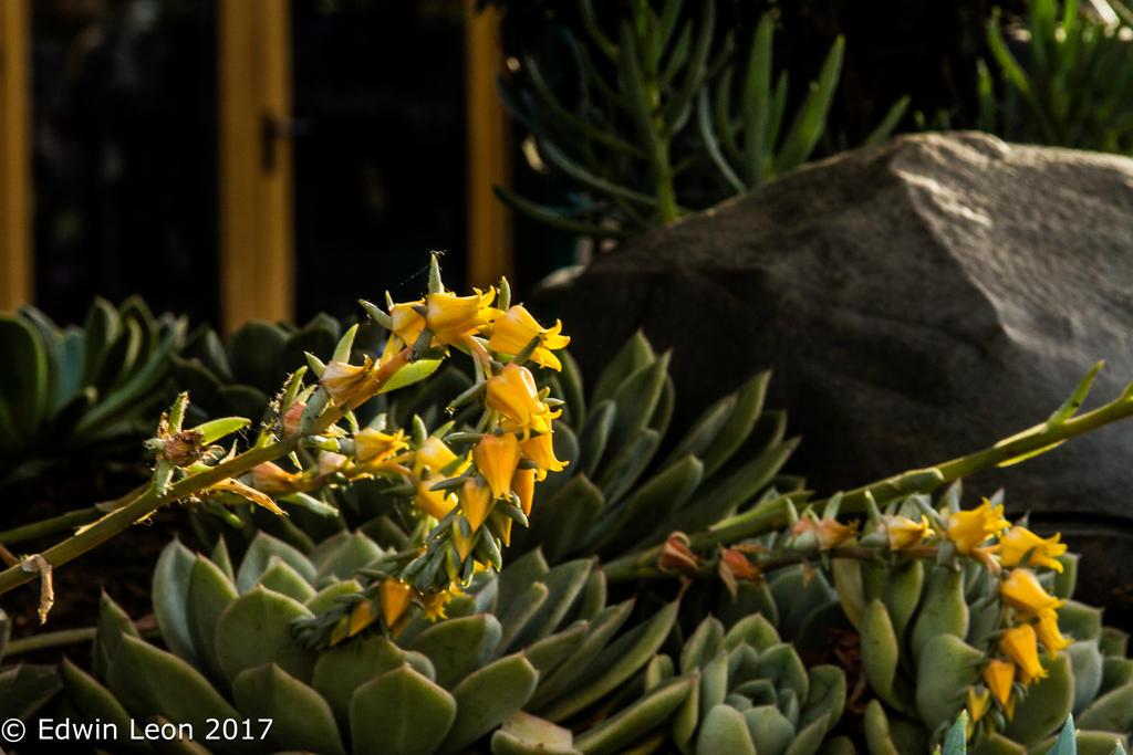 Vibrant Flowers by lunarleon1