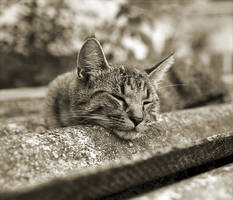 Sleeping on the roof. by CRuS23