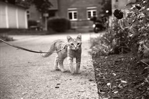 Odi on a walk. by CRuS23
