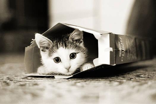 Moritz in Box