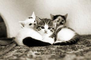 Katzen by CRuS23