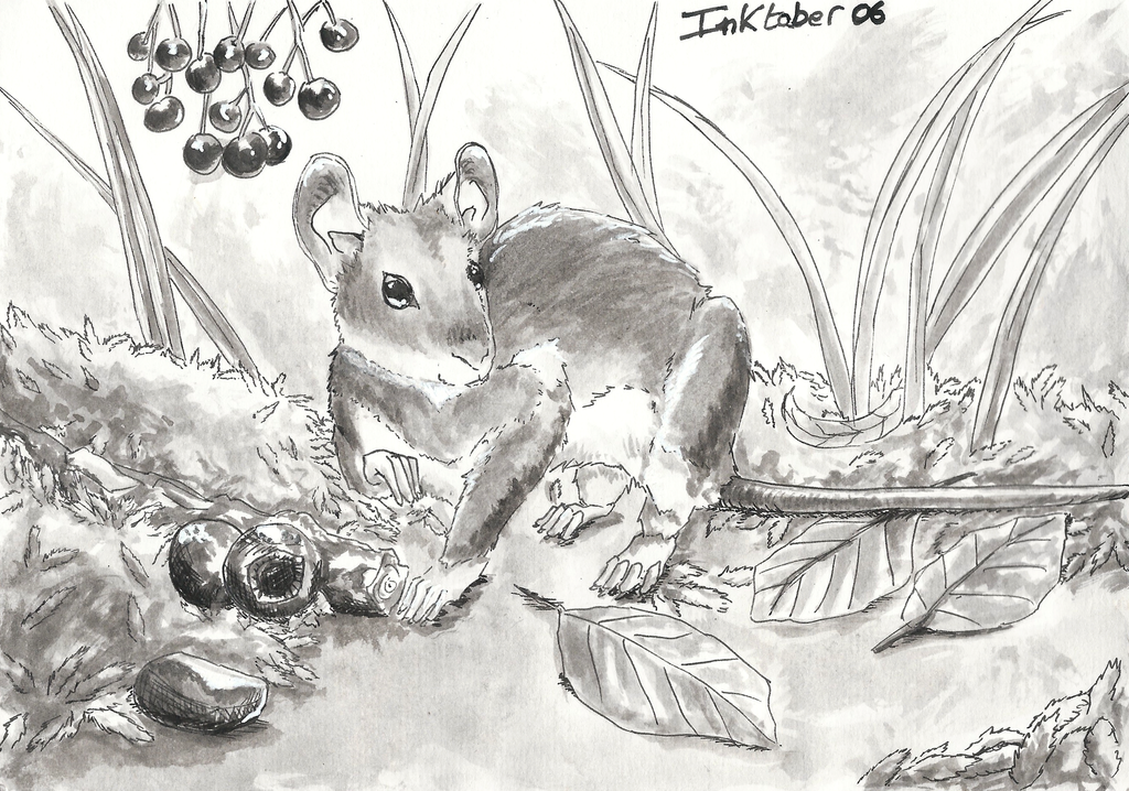 Inktober 06 - Yellow necked mouse by GreyMind666