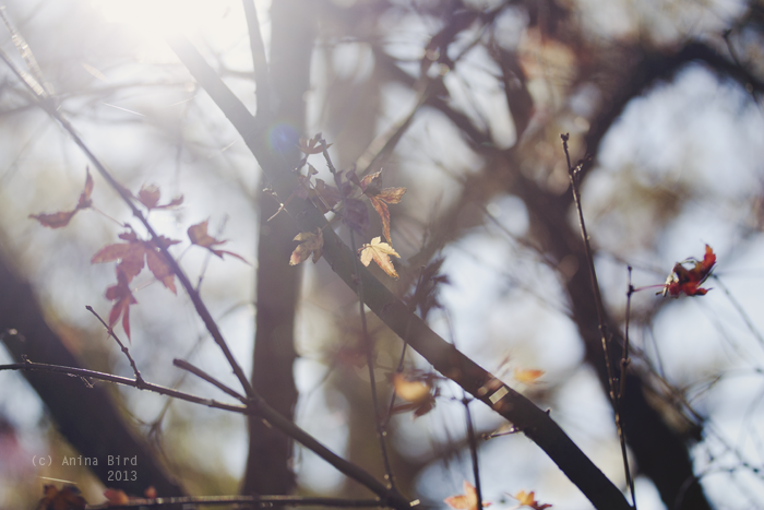 Winter Light by Anina-Bird