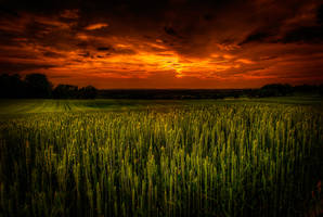 Cornfield 2 by TanorY
