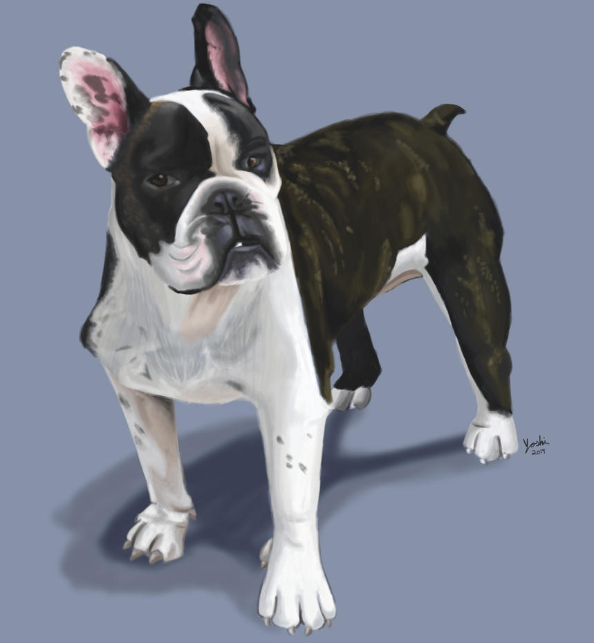 Bulldogs 3: Louie by ayarane
