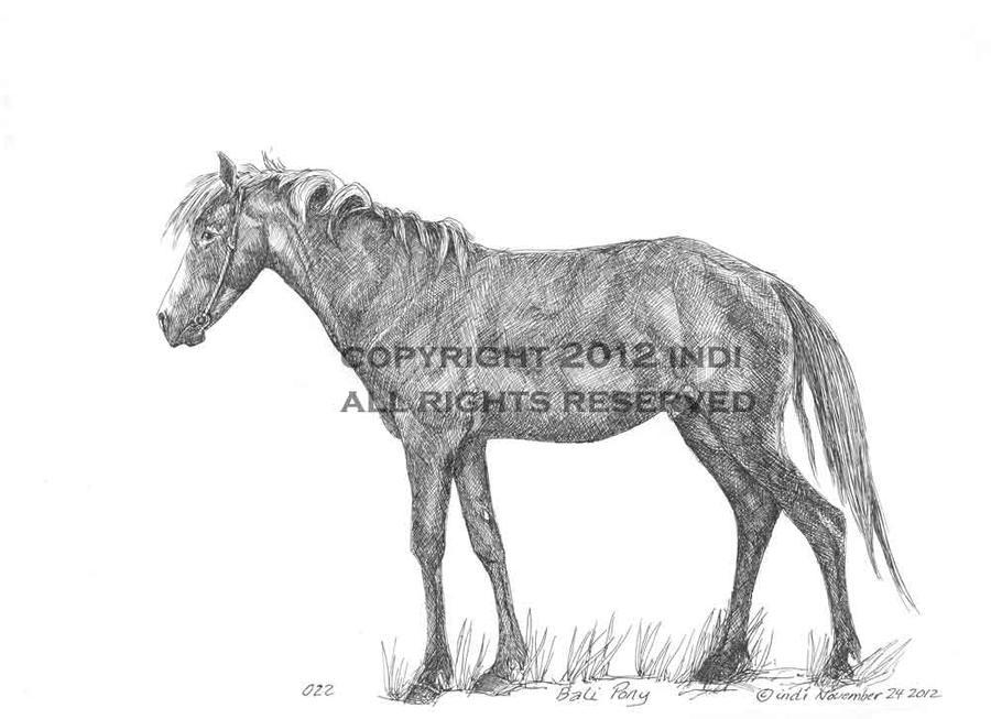 Bali Pony 022 by SarmatianWarrior