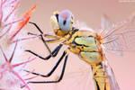 Dragonfly Profile II