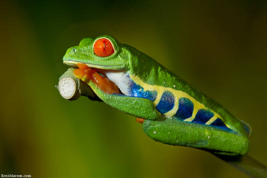 Pondering its Froginess