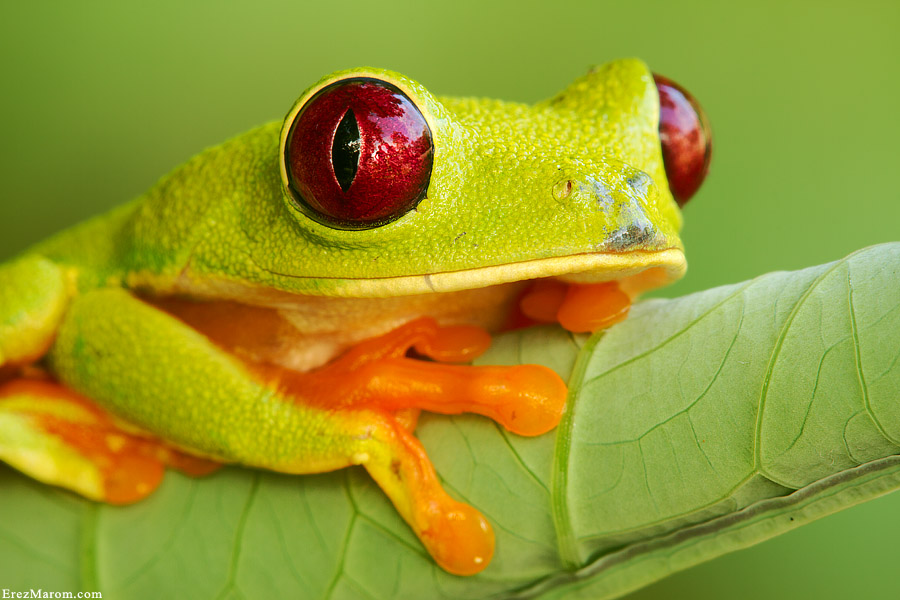 King Crimson by erezmarom