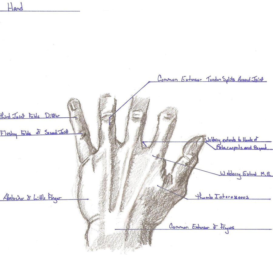 Hand Surface Anatomy Pictures to Pin on Pinterest - ThePinsta