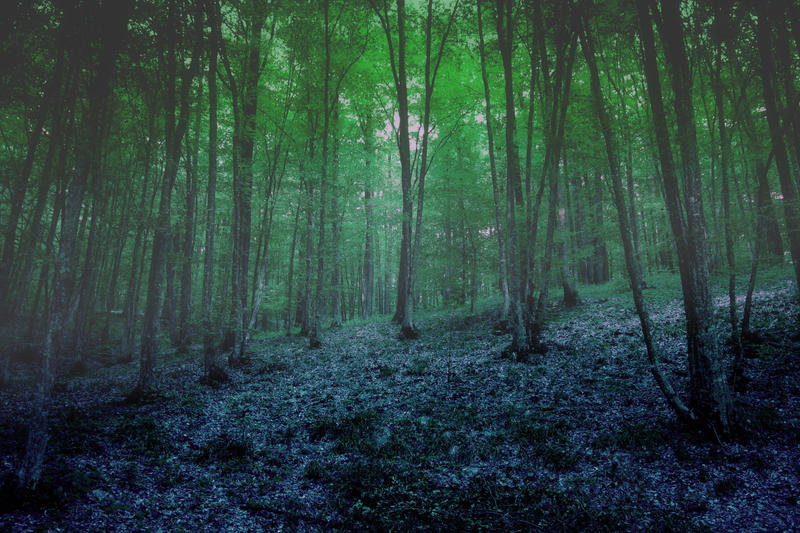Forrest 3 by violety