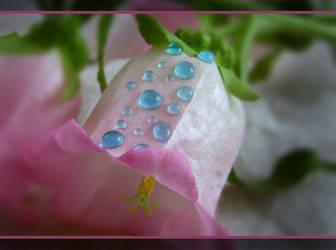 Pink Bell Blue Drops by Bluesun84