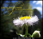 Life is the flower