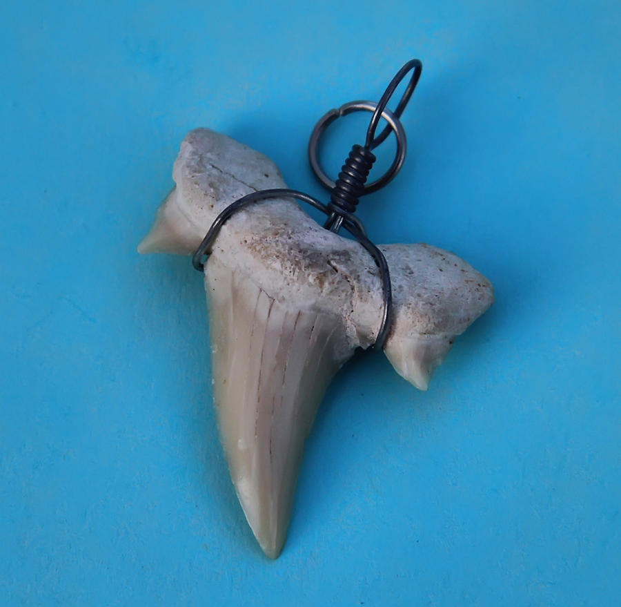Prehistoric great white shark tooth by joe lynn design on deviantart prehistoric great white shark tooth by joe lynn design aloadofball Gallery