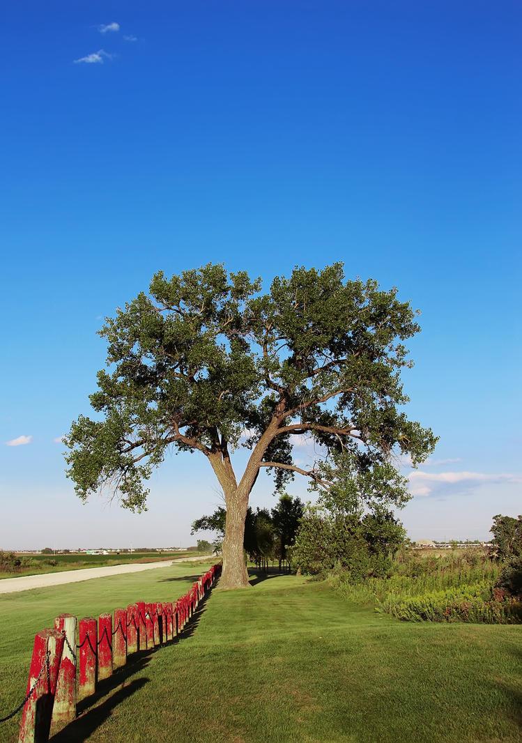 The Hanging Tree by Joe-Lynn-Design