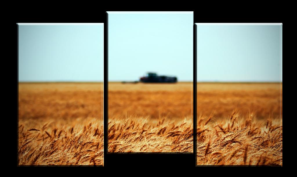 Wheat Farm 3 Panel Canvas Print by Joe-Lynn-Design