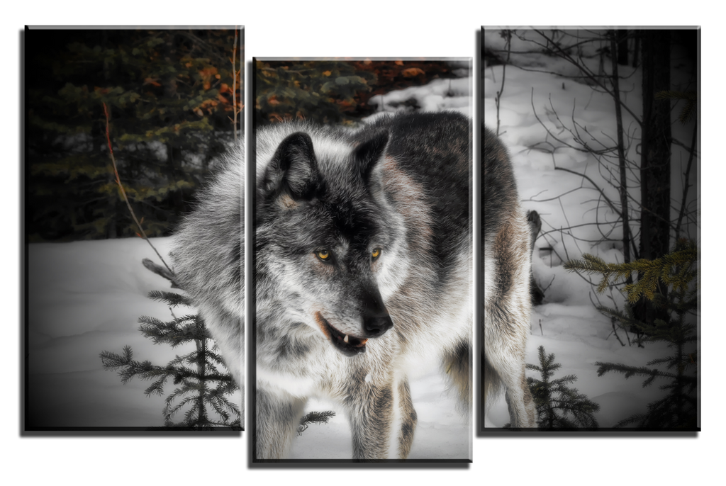 3 Panel Giclee Canvas Wolf Print by Joe-Lynn-Design