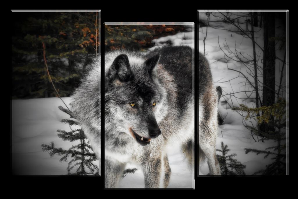 3 Panel Giclee Canvas Wolf Print by Joe-Lynn-Design