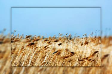 Whispering Winds by Joe-Lynn-Design