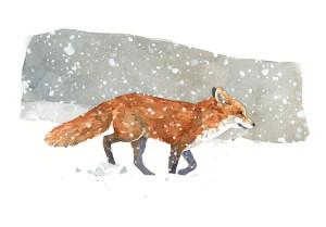 FinnyBritish's Profile Picture