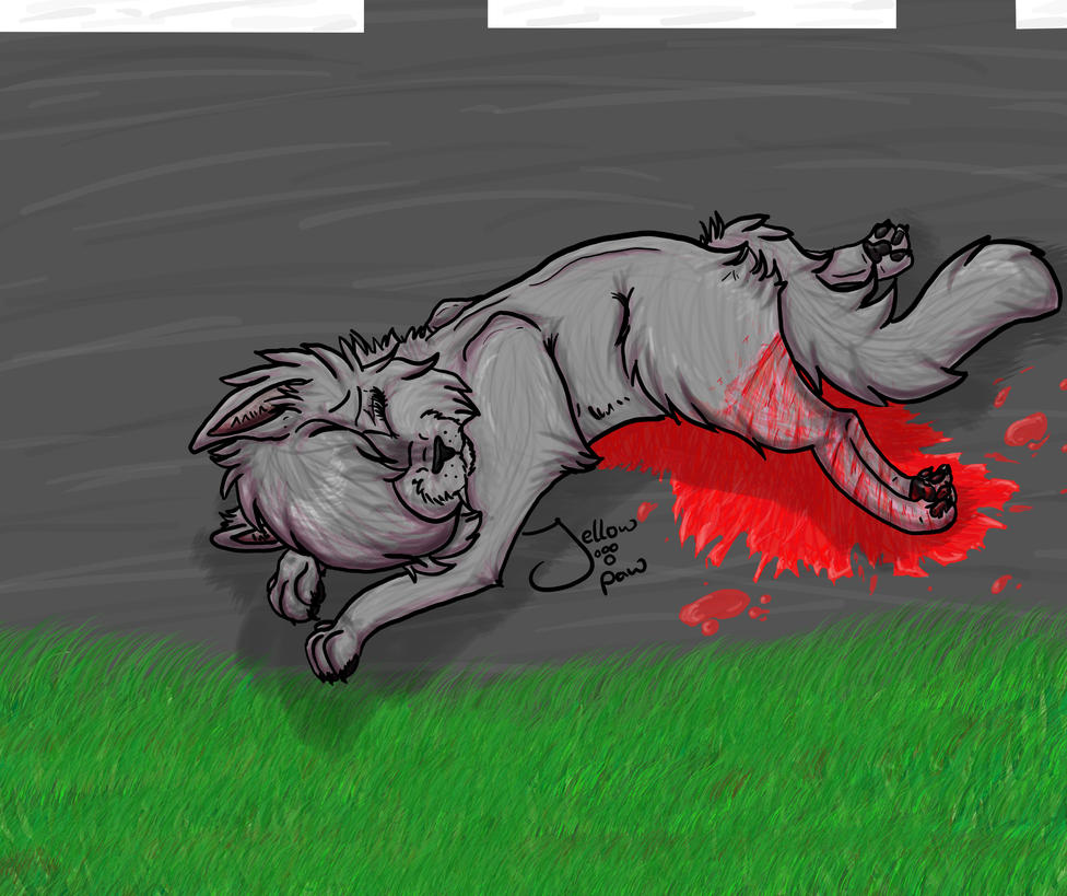 Cinderpaw\'s accident. Warrior Cats by jellowpaw on DeviantArt