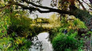River Bank - Practice