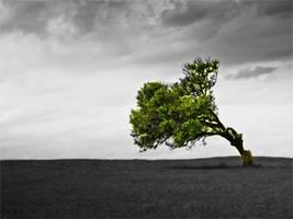 Tree by Lfcmaniac