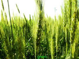 Green. is good. by Lfcmaniac