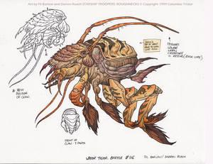 Water Tiger Beetle: SST