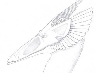 Rabia sketch by PrismatDragoon