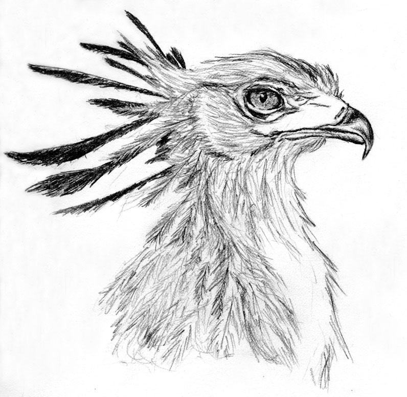 Secretary Bird -Raptor 2- By Tiggress On DeviantArt